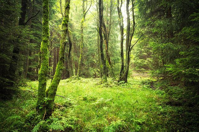 becas protección medio ambiente en alemania